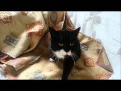 Dublin Cat Sitter Takes Care Of Your Cat At Home