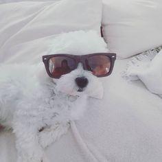 """Trust yourself and your taste ! Impose ton style ! Style """"London"""" Wayfarer Sunglasses   Modèle """"London"""" de lunettes Wayfarer"""