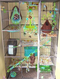 Are you planning to decorate your rat cage? If yes, then we have curated some of the best rat cage ideas that you can use as an inspiration for your cage. Cavy Cage, Cage Rat, Pet Rat Cages, Pet Cage, Ferret Cage, Sugar Glider Pet, Baby Glider, Sugar Glider Cage, Sugar Gliders