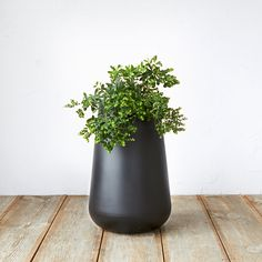 """Pure Droplet Tall Planter in Garden Outdoor Planters at Terrain 