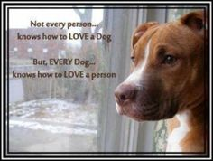 Every dog knows how to love a person.