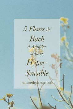5 Bach Flowers Ideal if You Are Hypersensitive Nature de Déesse Water Violet, Elixir Floral, Bach Flowers, Making Money On Youtube, Mind Tricks, Green Life, Positive Affirmations, Yoga Inspiration, Feel Good