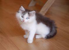 I miss when my weegies were kittens