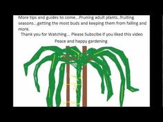 How to grow a Dragon Fruit tree 101