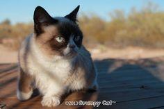 http://cdn.grumpycats.com/wp-content/uploads/2013/01/01.20.2013-v1-625x416.jpg
