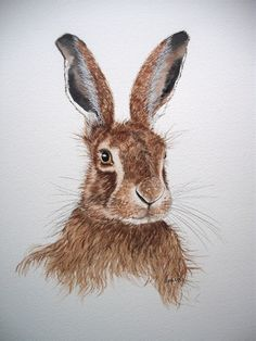 Original watercolour painting of a hare by by wildinsight on Etsy, £85.00