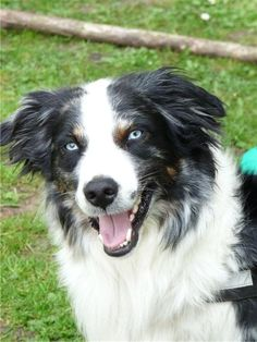aussie with a smile