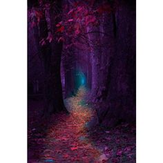 """ Fairytale Pathway "" ❤ liked on Polyvore featuring backgrounds"