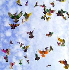 Flight pattern of beauty.