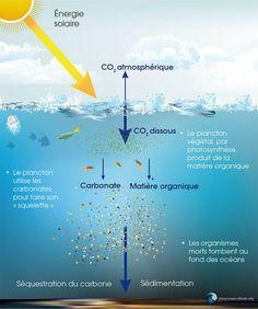 La pompe à carbone océanique décryptée