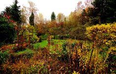 Kalt, feucht, Nieselregen. ...  War mal eben im Garten. Na ja, der sieht so aus, wie ein Garten eben am siebten November aussieht. Und morgen stell ich die Vogelfutterhäuschen auf. :-)