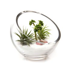 Create your own lush scene with our Lost World Terrarium Bowl. This hand-blown…
