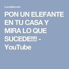 PON UN ELEFANTE EN TU CASA Y MIRA LO QUE SUCEDE!!!! - YouTube