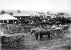 Loaded horse drawn wagons at Lowood Qld ca.1909