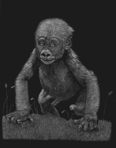 """Hoping for a Future"" Original 14 by 18 Scratchboard Art, Zimmerman, Monkeys, Wildlife, Future, Artist, Animals, Rompers, Future Tense"
