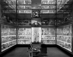 Matthew Pillsbury. Crystal Gallery, Hunterian Museum, London, 2007.
