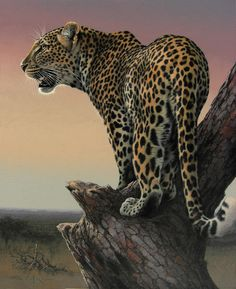 Early-light by Fuz-Caforio-Art on DeviantArt