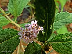 """Olhares do avesso: sem foco thursday poetry (poesia de quinta) """"pequena flor gela toda a delicadeza em recorte"""" """"Little Flower freezes all the delicacy Cutout"""" #poesia #janela #flor #desfoque #poetry #window #flower #blur #Shīgē #chuāngkǒu #huā #móhú #Kavitā #khiṛakī #phūla #kalaṅka"""