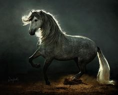 Foto de un caballo... Que buena foto...