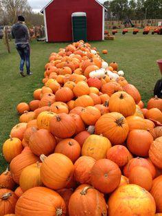 Pumpkin patch at oak lake!! So much fun