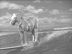 "Mr Ed the talking horse (of course, of course). Mr. Ed won some Patsy Awards. (Oscars for animals) In 1962 & 1963, Mr. Ed won 1st place for the ""Mister Ed"" series. Mr. Ed was awarded 2nd place in 1964, then 3rd place winner in 1965. The categories include all types of animals not just horses."