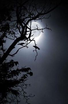I love seeing the Moon through trees!!