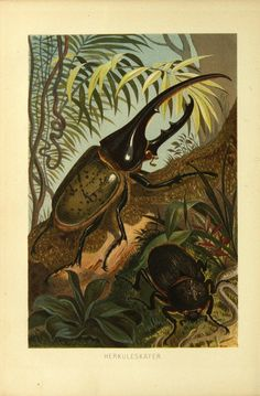https://www.flickr.com/photos/biodivlibrary/9521364005/sizes/l