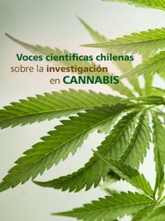 http://www.explora.cl/descubre/articulos-de-ciencia/naturaleza-articulos/botanica-articulos/5448-voces-cientificas-chilenas-sobre-la-investigacion-en-cannabis