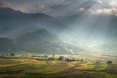 Rice Farms in #Vietnam - #Vurrio http://vurrio.com