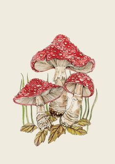Botanical style illustrated print of Amanita Muscaria on a beige background Mushroom Drawing, Mushroom Art, Rosen Tattoo Schulter, Tattoo Kind, Wall Prints, Poster Prints, Posters, Arte Indie, Mandala Tattoo Design