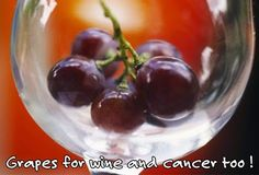 Grapes , for wine and Cancer -  Grapes and grape juice, especially purple and red grapes, contain resveratrol. Resveratrol has strong antioxidant and anti-inflammatory properties. In laboratory studies, it has prevented the kind of damage that can trigger the cancer process in cells. There is not enough evidence to say that eating grapes or drinking grape juice or wine (or taking supplements) can prevent or treat cancer.