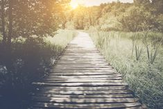 Forest path – Free Photo on Barn Images Spiritual Path, Spiritual Guidance, Radical Forgiveness, Course In Miracles, Time To Move On, Forest Path, Spiritual Connection, No Matter What, Guided Meditation