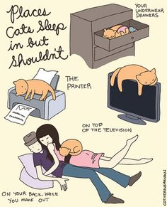 Dove dormono i gatti?