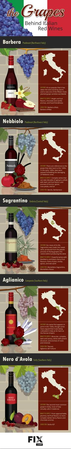 Italian wine is known worldwide for being bold and delicious, but how much do you know about the grapes that goes into each bottle? Learn all about Italian red wines in this grape guide!