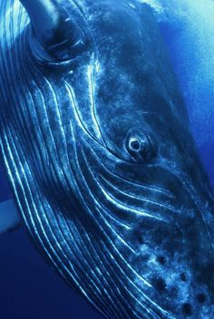 Dream of Whale Totem.: Informations About Dream of Whale Totem. Orcas, Under The Water, Foto Fantasy, Humpback Whale, Whale Sharks, Ocean Creatures, Blue Whale, Sea And Ocean, Whales