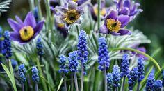 Flowers by Razvan Antonescu on 500px