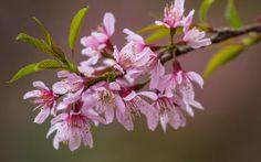 Imagenes de flores del mundo