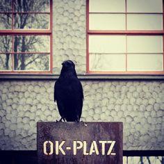 #real #bird #okplatz #museum #linz #austria #lnz #vogel #waiting #warten #sitting #animals #uhof #sitzn #zwitschern