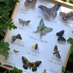 Une planche d\'entomologie plus vraie que nature