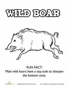 Worksheets: Wild Boar Coloring Page