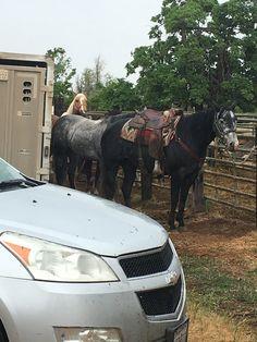Cowboy Horse, Horses, Board, Animals, Animales, Animaux, Animal, Animais, Horse