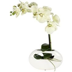 small white orchid glass pot - Google Search