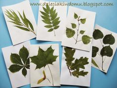 zielnik z liści drzew dla dzieci