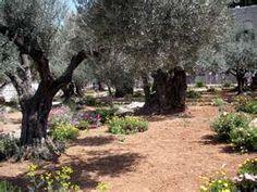 Garden of Gethsemane - Agony in the Garden - Mount of Olives Jerusalem