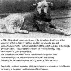 I have heard this story before, I've even seen the movie, and I love it. It reminds me of my dog (: Hachi A Dogs Tale, Animals And Pets, Cute Animals, A Dog's Tale, Hachiko, Akita Dog, Loyal Dogs, Art Drawings For Kids, Faith In Humanity Restored