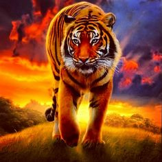 Awesome Tiger! Please like It, Its My First Picture Also Follow Me I'm CuteFox483 And Also Just A Random Question If You Play Animal Jam Then Thats Kewl Cause I Do Too! And If You Do You Can Buddy Me I'm MightyCoolPaw! :3