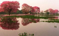 El Pantanal Paraguayo en Fuerte Olimpo: El mayor sistema de humedales del mundo, que comprende también parte de Brasil y Bolivia. Anualmente las aguas suben varios metros, inundando un extenso territorio, y luego retroceden, creando un escenario natural de gran belleza, refugio de aves, peces, anfibios, reptiles y mamíferos.
