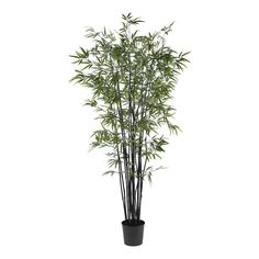 Black Bamboo Silk Tree - 6.5 Feet Tall -- Check out the image by visiting the link.