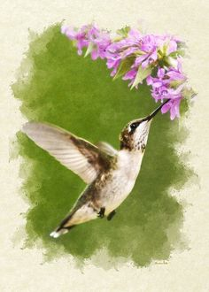 """Hummingbird and Flowers Blank Note Card Greeting Card for sale by Christina Rollo.  Our premium-stock greeting cards are 5"""" x 7"""" in size and can be personalized with a custom message on the inside of the card.  All cards are available for worldwide shipping and include a money-back guarantee."""