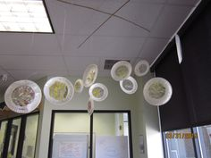 sun catchers hanged from the ceiling